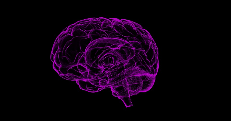 fioletowy mózg